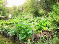 comment bien gérer l'Association de légumes au jardin potager bio