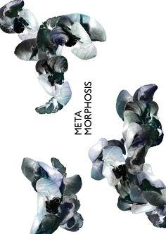 Maria Amaro - Metamorphosis-Exhibition