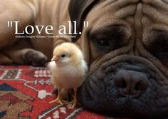 charming life pattern: love all - anthony douglas williams - quote - animals ...