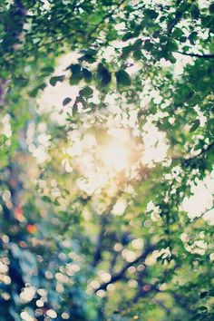 Sun shinning through windswept trees `¤`¤