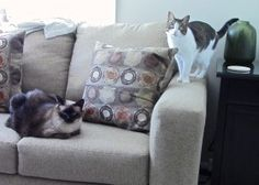 Tips To Stop Your Cat Scratching Your Furniture