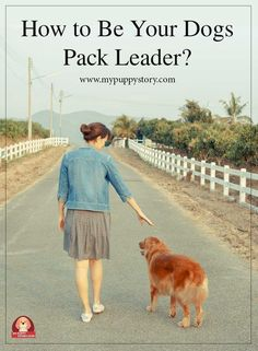 Are you the proud owner of an adorable dog? If so, it is best for you to assume the role of your dog's pack leader to ensure that it always listens to you. - My Puppy Story