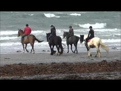 Horse Riding in the Burren. Group of visitors from riding out into the Atlantic Ocean Time Travel, Us Travel, Riding Holiday, Beach Rides, Atlantic Ocean, Horse Riding, Trekking, Montana, Ireland