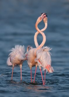 """#8"" 