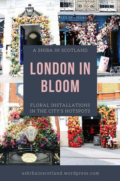 London's most beautiful floral displays this summer