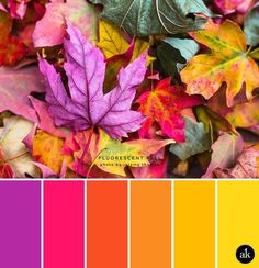 a neon-leaf-inspired color palette // purple, neon pink, orange, yellow