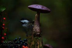 Purple mush by Andre_Villeneuve. (http://ift.tt/2dg6ar2)