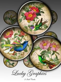 colibri in flowers - Digital Collage Sheet -2 inch circle- Printable Images for paper craft, buttons, hairbow, bottle cap, magnets. 145