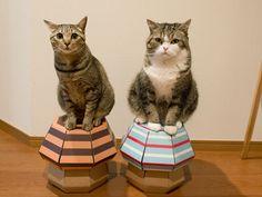 maru and hana cat