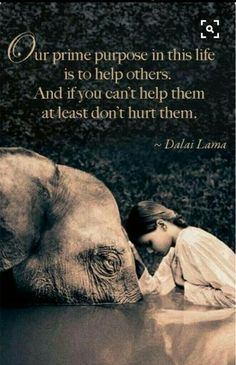 """Our prime purpose in this life is to help others. And if you can't help them, at least don't hurt them. the Dalai Lama (Photography: Gregory Colbert Dalai Lama, Namaste, Foto Picture, Sweet Picture, Love Quotes, Inspirational Quotes, Elephant Love, Elephant Spirit Animal, Elephant Quotes"