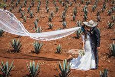 Agaves excelente clima en tequila Jalisco