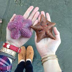 Starfish! - @eat.sleep.wear.