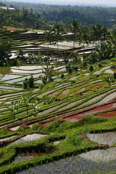 Stunning rice terraces in central Bali, Indonesia FLOATING LEAF ECO-LUXURY RETREAT Walk in. Float out. http://balifloatingleaf.com