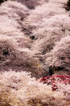 中目黒・桜 by u_ran2008, via Flickr / 2011, Nakameguro,Tokyo