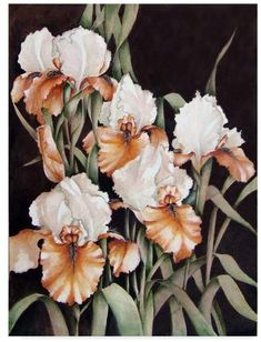 CAROL J. Trademark Fine Art Rupp 'Mothers Garden' Canvas Art