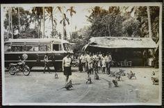 Sangeh?, circa 1950