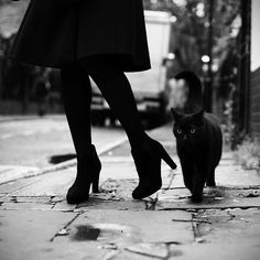 Black cat, black tights