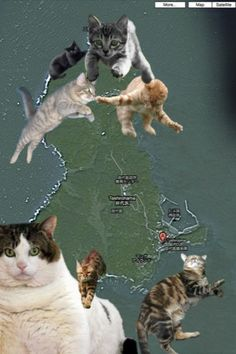 Cat Island, Japan  This place actually exists...this is not an accurate satellite view however.