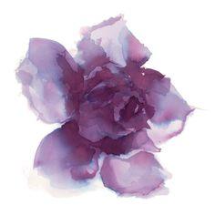 BuenaVentura/Work in progress... Roses