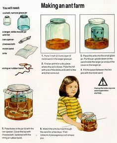 How To Make An Ant Farm for kids? - fun projects for kids at home - - Learn, Create, Have Fun Preschool Science, Science For Kids, Science Activities, Science Projects, Activities For Kids, Insect Activities, Science Centers, Fun Projects For Kids, Art For Kids