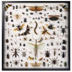 coleccion de insectos - Buscar con Google