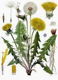 Mangiare Sano Si Può!: Cinque erbe per depurare l'organismo