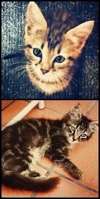 Gattini smarriti aiutatemi a trovarli