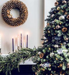 Christmas Trees//