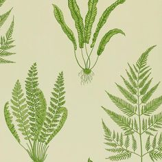 Sanderson Woodland Ferns DAPGWO102 (Green) wallpaper from A Painters Garden collection, priced per roll. Woodland Ferns is a graphic two-colour, Surface Printed design in which the detailed pen and ink drawings are set against coloured grounds