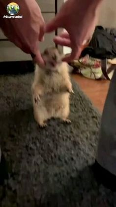 Cute Wild Animals, Cute Little Animals, Cute Funny Animals, Animals And Pets, Cute Cats, Cute Animal Videos, Funny Animal Pictures, Beautiful Creatures, Animals Beautiful