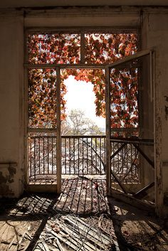 draping leaves. balcony.peaceful. cut off from reality. slice of heaven...