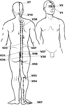 Plate of the Meridian of the Vessie: board of the complete course of the meridian and loc . - - Plate of the Meridian of the Bladder: plank of the complete course of the meridian and location of the main acupressure points. Acupuncture Points, Acupressure Points, Qi Gong, Alternative Health, Alternative Medicine, Tai Chi, Chronic Cystitis, Shiatsu, Mudras