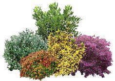 3, Cami, Flowers, Plants, Plant, Royal Icing Flowers, Flower, Florals, Floral