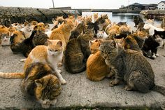 aoshima japan cat island | Japan's cat island: A visit to Aoshima, where cats outnumber people by ...
