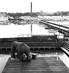 Helsingør svømmestadion i Nordhavnen