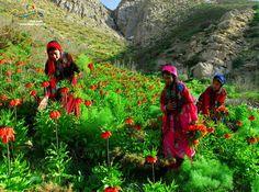 Lorestani nomads - IRAN