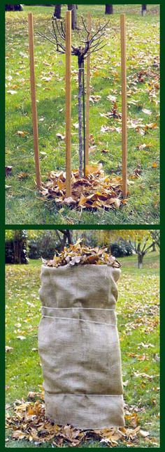 From Better Homes & Gardens - How to prepare and protect your roses for winter.