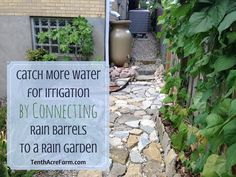 Collecting rain from your roof in rain barrels is a great way to use a free resource to irrigate the garden. However, rain barrels can fill up within minutes during a rain event. Directing rain barrel overflow into a rain garden is one way to keep more water on your property for irrigation or to cre
