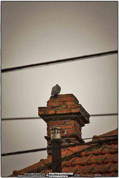 Safari Fotográfico a Barrio Rawson 2012