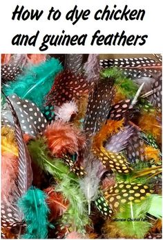 How to dye chicken & guinea feathers