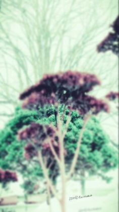 Dreams Dreams, Plants, Plant, Planets