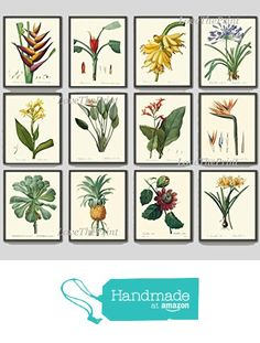 Tropical Flower Botanical Print Set of 12 Antique Beautiful Redoute Blooming Bird of Paradise Banana Plant Fruit Pineapple Passion Fruit Southern Garden Nature Home Room Decor Wall Art Unframed from LoveThePrint http://www.amazon.com/dp/B01FBFR2AY/ref=hnd_sw_r_pi_dp_Y1Wlxb04FNCHP #handmadeatamazon