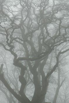 beautiful tree in the fog