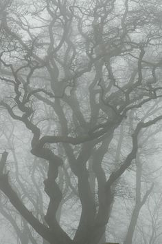 beautiful tree in the fog