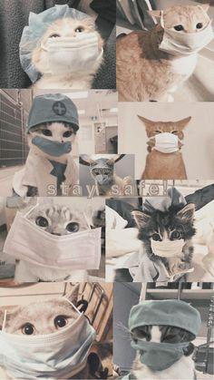 Iphone Wallpaper Cat, Funny Cat Wallpaper, Cute Panda Wallpaper, Bear Wallpaper, Cute Wallpaper Backgrounds, Animal Wallpaper, Cute Cartoon Wallpapers, Cute Kawaii Animals, Cute Little Animals