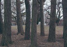 Tree trunks - The Trees of Fort Greene Park - Nalata Nalata