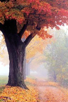 ✯ Foggy Autumn Morning - Maple Trees - Seasons of the Year Autumn Morning, Foggy Morning, Early Morning, Foto Picture, Belle Photo, Beautiful World, Autumn Leaves, Autumn Trees, Red Leaves