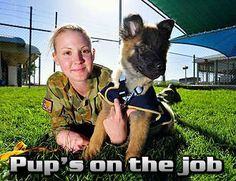 dogs in military - Google Search