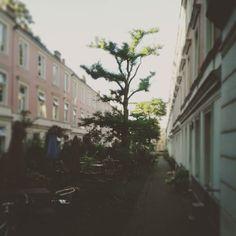 I <3 this community front yard. #Hamburg #Eppendorf #Falkenried #community #neighbourhood #frontyard #lawn #urbanliving #urbanplanning #urban #greencity #tree #hamburgmeineperle #ilovehh #instahamburg