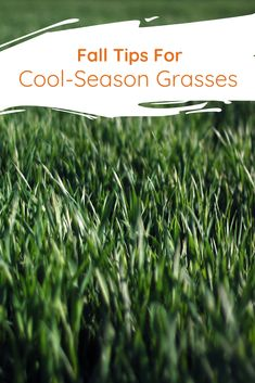 Turfgrass agronomist, Kevin Ross, explains why the late fall dormant application of slow-release fertilizer is crucial for your lawn.